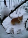 すごい雪!