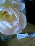 薔薇 4。